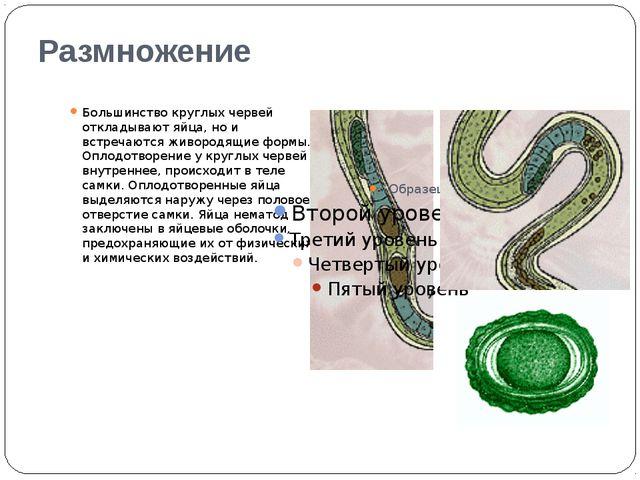 Размножение Большинство круглых червей откладывают яйца, но и встречаются жив...