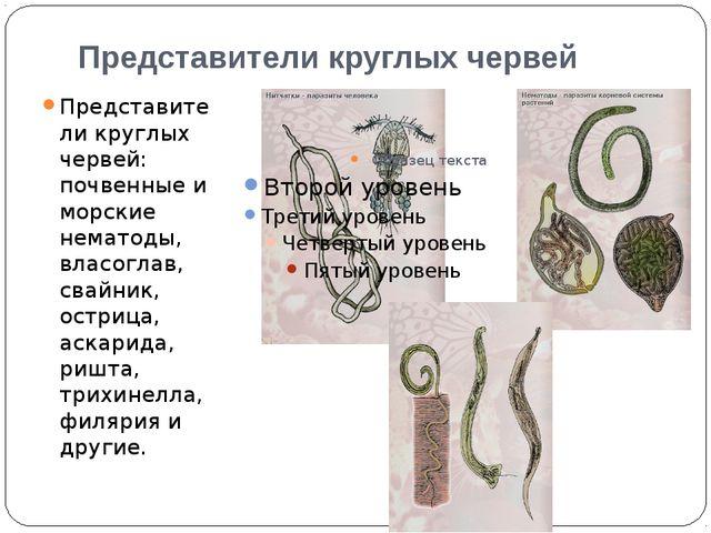 Представители круглых червей Представители круглых червей: почвенные и морски...
