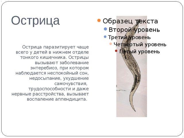 Острица Острица паразитирует чаще всего у детей в нижнем отделе тонкого кишеч...