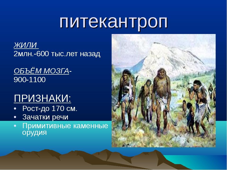 питекантроп ЖИЛИ 2млн.-600 тыс.лет назад ОБЪЁМ МОЗГА- 900-1100 ПРИЗНАКИ: Рост...