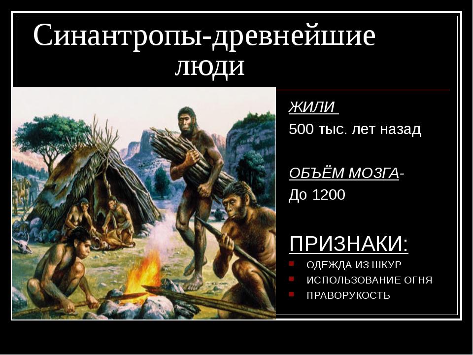 Синантропы-древнейшие люди ЖИЛИ 500 тыс. лет назад ОБЪЁМ МОЗГА- До 1200 П...