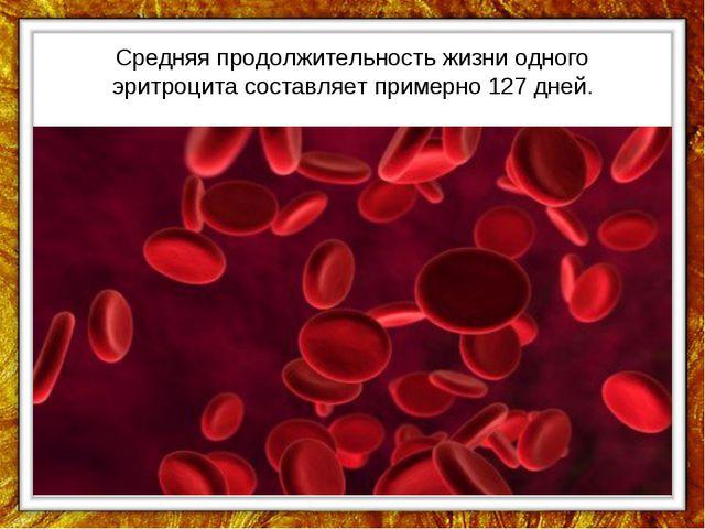 Средняя продолжительность жизни одного эритроцита составляет примерно 127 дней.