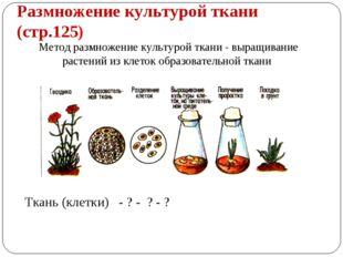 Размножение культурой ткани (стр.125) Метод размножение культурой ткани - выр