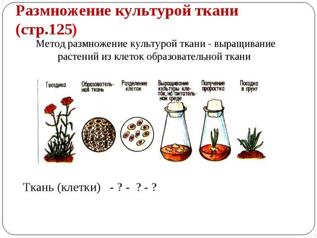 Размножение культурой ткани (стр.125) Метод размножение культурой ткани - выр...