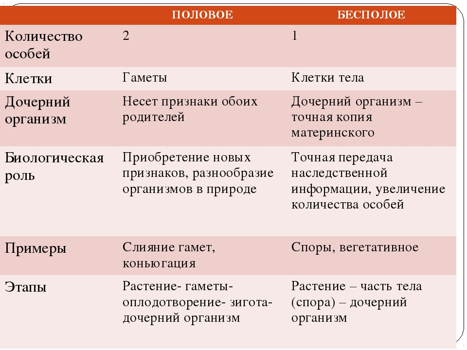 ПОЛОВОЕБЕСПОЛОЕ Количество особей21 КлеткиГаметы Клетки тела Дочерний о...