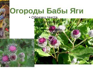 Огороды Бабы Яги