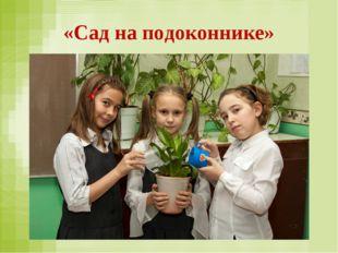 «Сад на подоконнике»
