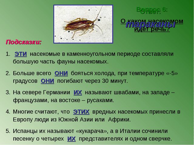 Вопрос 6: О каком насекомом идет речь? Ответ: тараканы Подсказки: ЭТИ насеком...