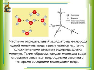 Частично отрицательный заряд атома кислорода одной молекулы воды притягиваетс