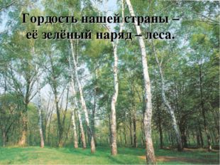 Гордость нашей страны – её зелёный наряд – леса.