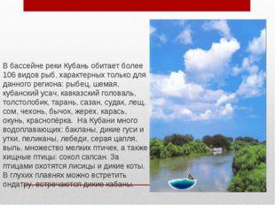 В бассейне реки Кубань обитает более 106 видов рыб, характерных только для да