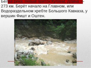 Белая река, левый приток Кубани. Длина— 273км. Берёт начало на Главном, или