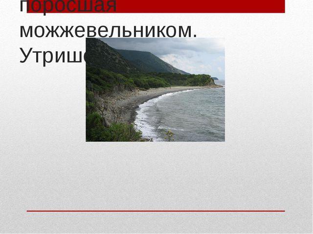 Полоса Черного моря, поросшая можжевельником. Утришский заказник