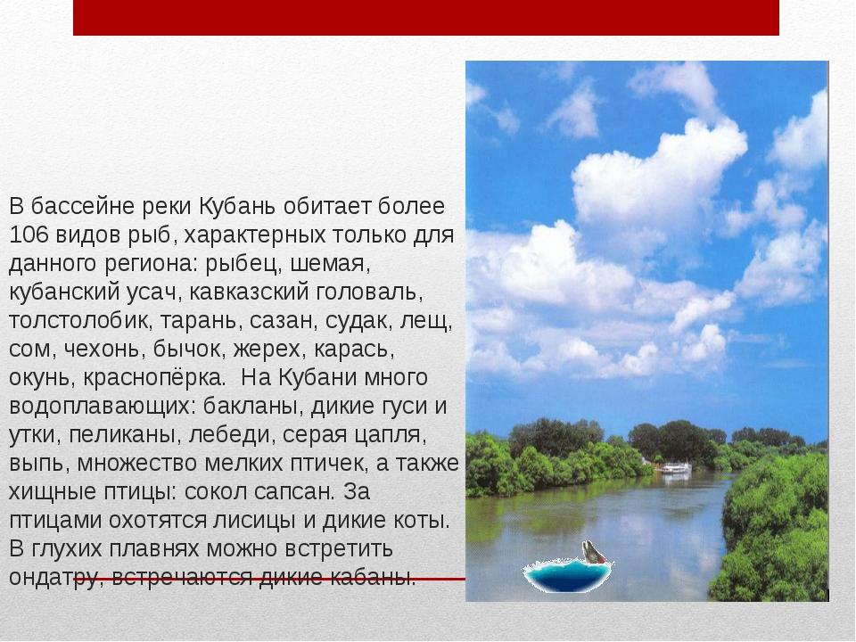 В бассейне реки Кубань обитает более 106 видов рыб, характерных только для да...