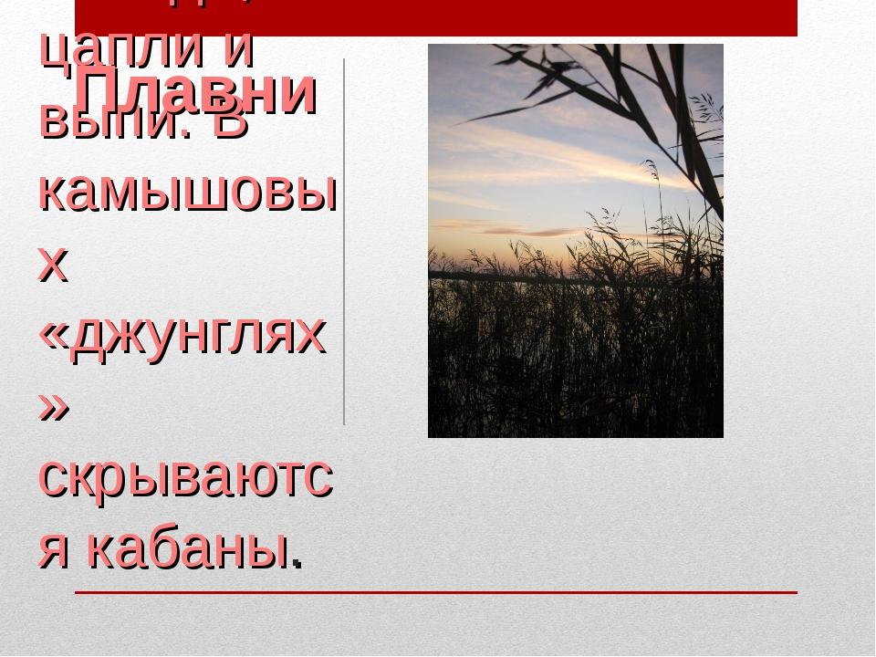 Мир плавней Краснодарского края богат. Бесконечные, поросшие камышом просторы...