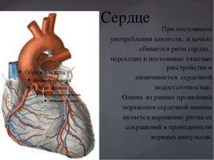 Сердце При постоянном употреблении алкоголя, в начале сбивается ритм сердца,