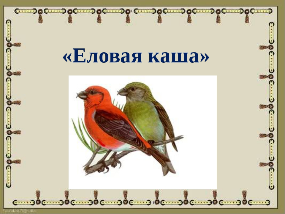 «Еловая каша»