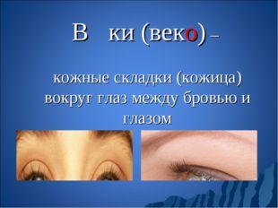 Ве́ки (веко) – кожные складки (кожица) вокруг глаз между бровью и глазом