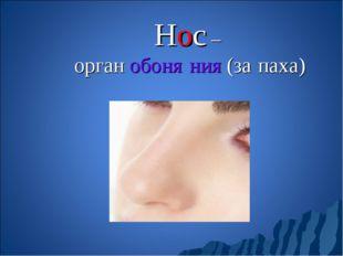 Нос – орган обоня́ния (за́паха)