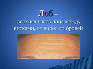 Лоб – верхняя часть лица между висками, от волос до бровей