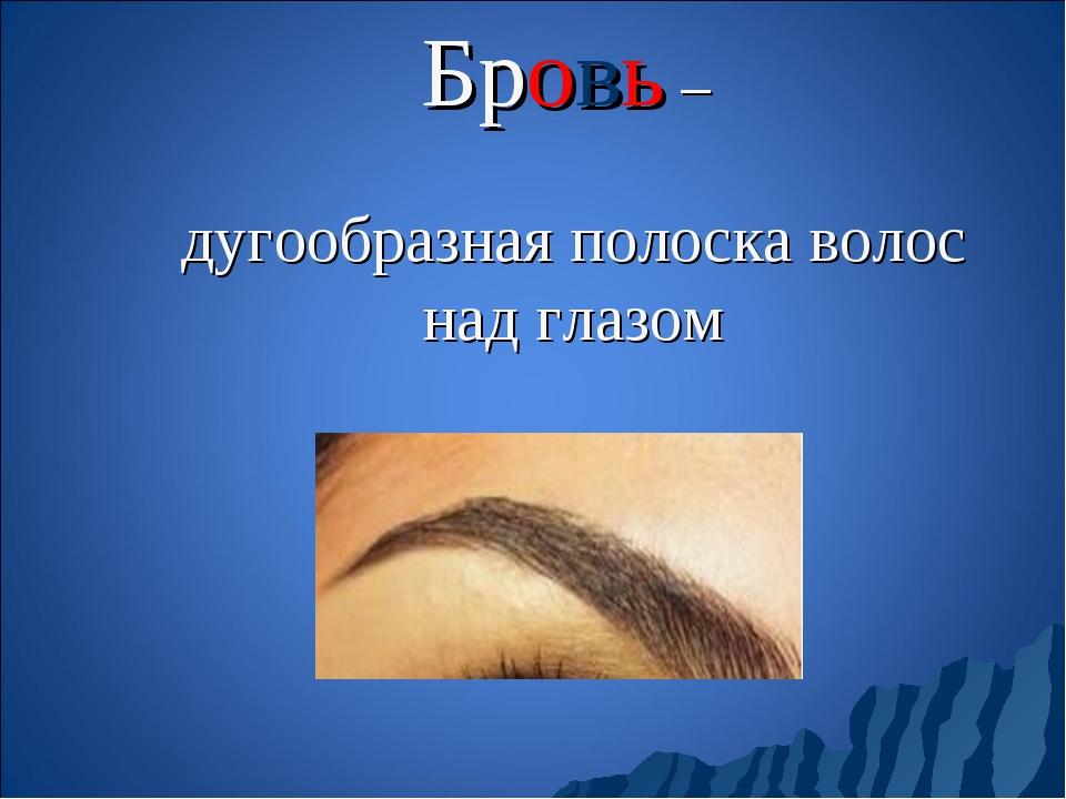 Бровь – дугообразная полоска волос над глазом