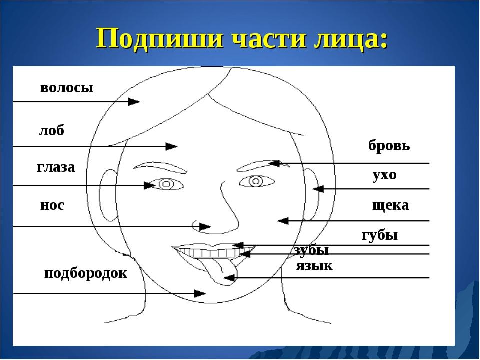 Подпиши части лица: волосы лоб глаза нос бровь ухо щека губы зубы язык подбор...