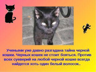 Учеными уже давно разгадана тайна черной кошки. Черных кошек не стоит боятьс