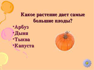 Какое растение дает самые большие плоды? Арбуз Дыня Тыква Капуста