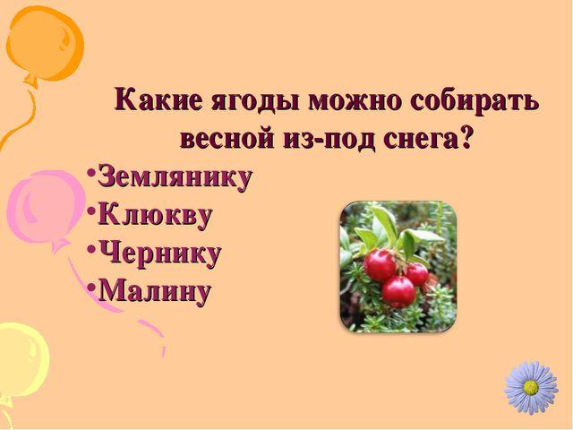 Какие ягоды можно собирать весной из-под снега? Землянику Клюкву Чернику Малину