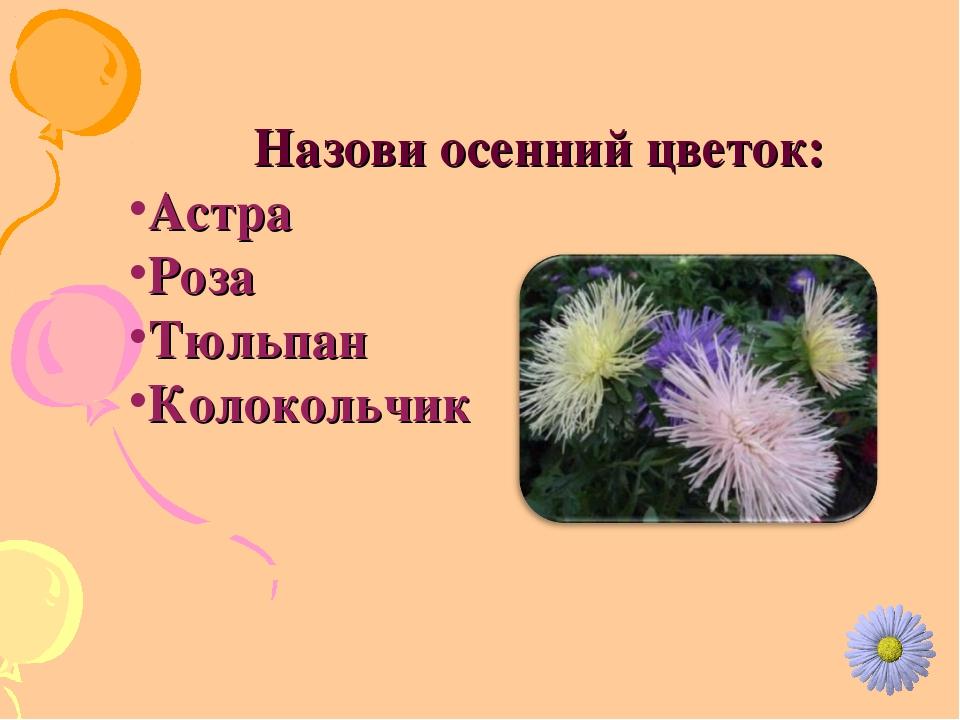 Назови осенний цветок: Астра Роза Тюльпан Колокольчик