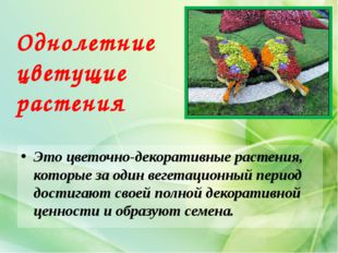 Однолетние цветущие растения Это цветочно-декоративные растения, которые за о