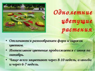 Однолетние цветущие растения Отличаются разнообразием форм и окрасок цветков.