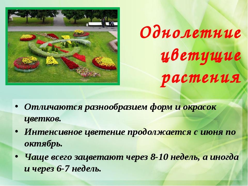 Однолетние цветущие растения Отличаются разнообразием форм и окрасок цветков....