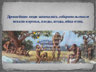 Древнейшие люди занимались собирательством: искали коренья, плоды, ягоды, яйц