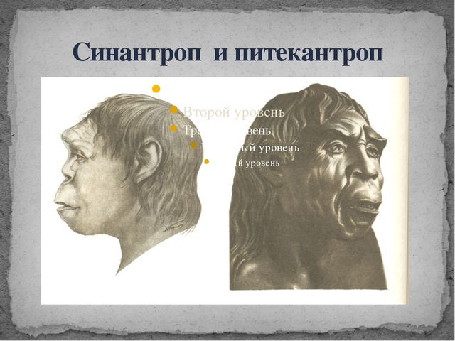 Синантроп и питекантроп