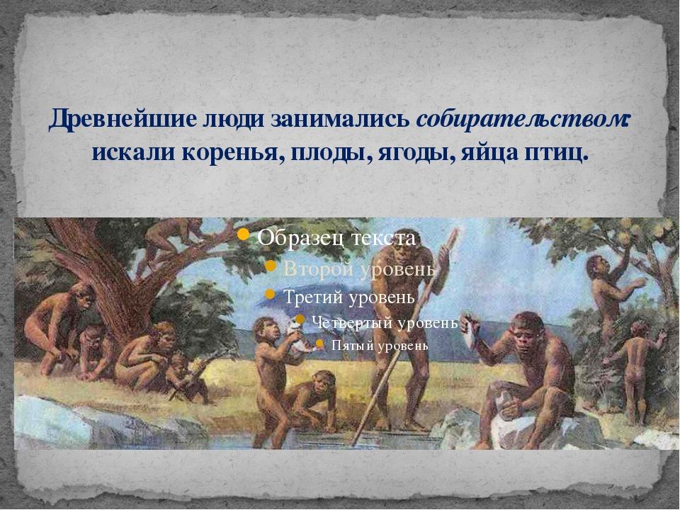 Древнейшие люди занимались собирательством: искали коренья, плоды, ягоды, яйц...