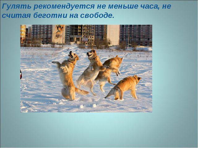 Гулять рекомендуется не меньше часа, не считая беготни на свободе.