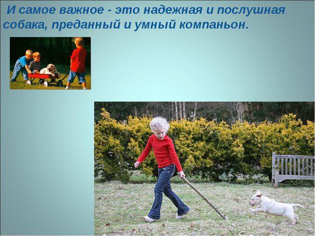 И самое важное - это надежная и послушная собака, преданный и умный компаньон.