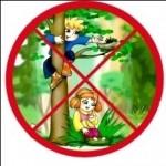 Лес наше богатсво детские рисунки фото
