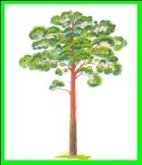 http://planetadetstva.net/wp-content/uploads/2013/10/konspekt-zanyatiya-dlya-srednej-gruppy-beregite-les-les-nashe-bogatstvo3.jpeg
