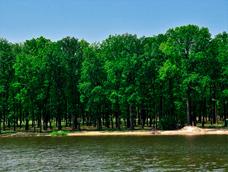 Великоанадольский лес отдых
