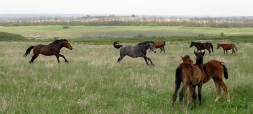 http://visitdonetsk.info/images/priroda/homut1.jpg