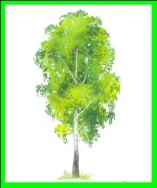 Сценарии средней группе про лесной жизни