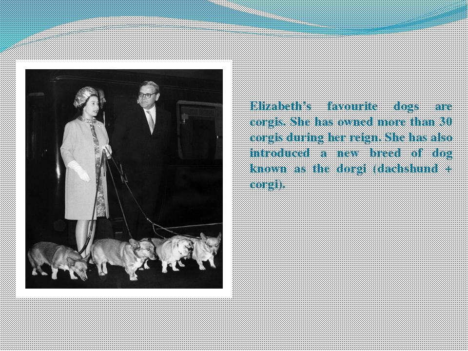 Elizabeth's favourite dogs are corgis. She has owned more than 30 corgis duri...