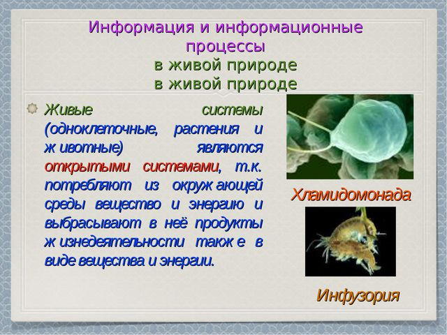 Информация и информационные процессы в живой природе Живые системы (одноклето...