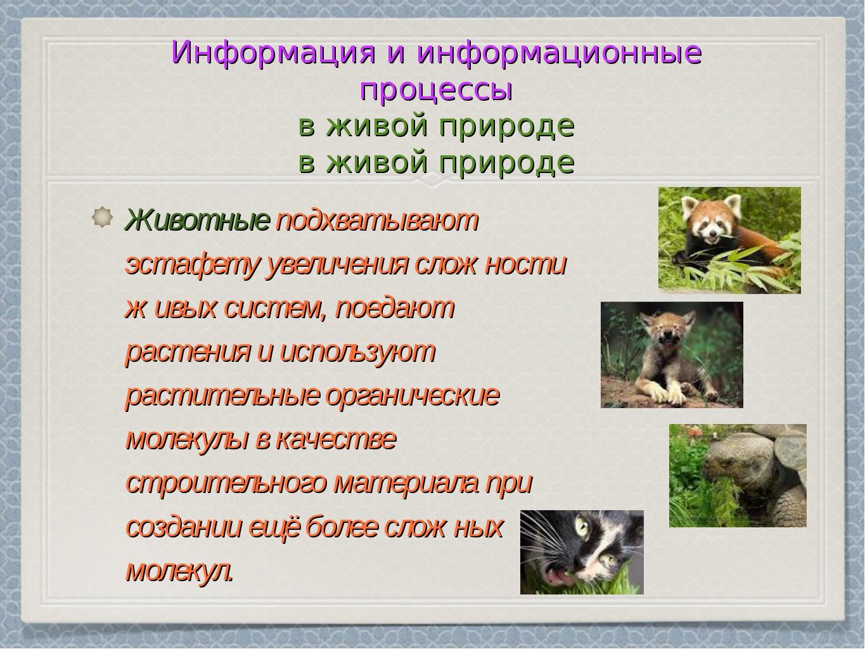 Информация и информационные процессы в живой природе Животные подхватывают эс...