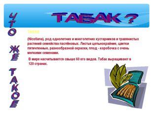 ТАБАК (Nicotiana), род однолетних и многолетних кустарников и травянистых рас