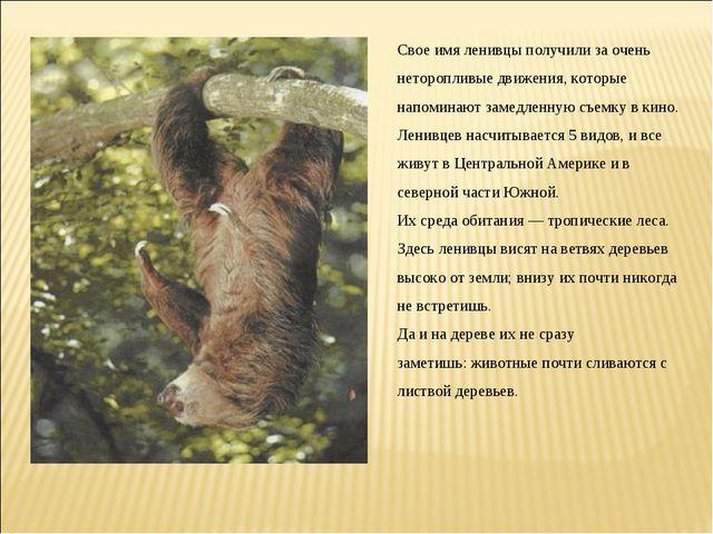 Свое имя ленивцы получили за очень неторопливые движения, которые напоминают...