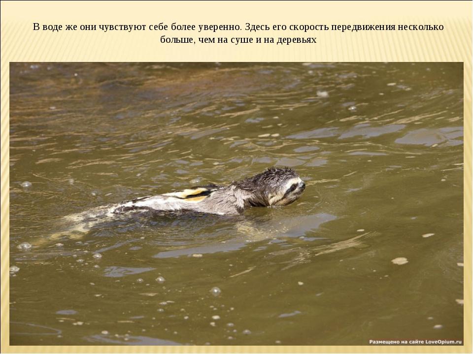 В воде же они чувствуют себе более уверенно. Здесь его скорость передвижения...