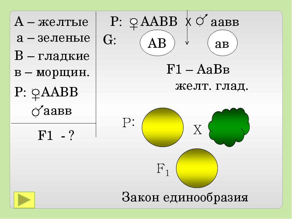 А – желтые а – зеленые В – гладкие в – морщин. P: ААВВ аавв F1 - ? Р: ААВВ Х...